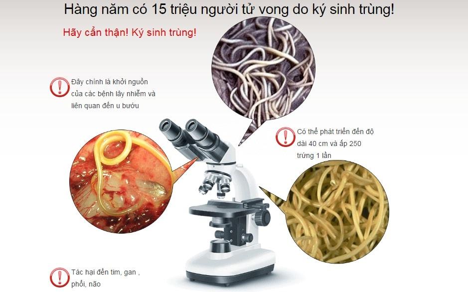Một số thực phẩm tiêu diệt ký sinh trùng trong cơ thể con người